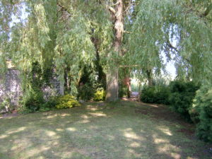 A weeping willow next to a patch of shady grass