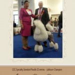 Italy 2013 Standard Poodles