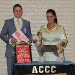 ACCC Sweeps