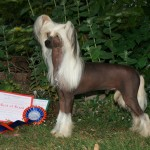 Ch Flagstone's Chinese Pony At Vanitonia